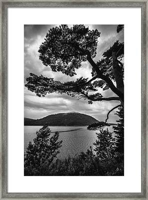 The Fjord And The Tree Framed Print by Robert Clifford
