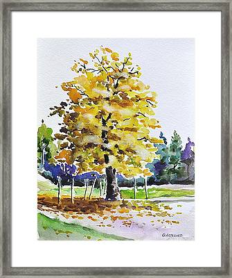 The Flaming Tree Framed Print