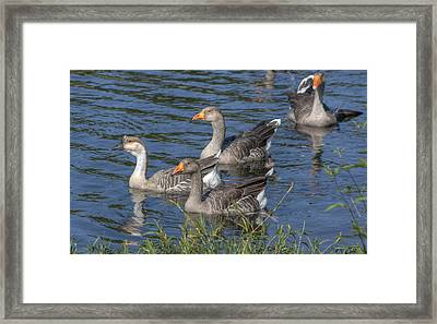 The Fleet's In Framed Print by Stephen Gray