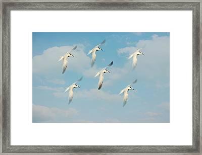 The Flight Framed Print by Kim Hojnacki