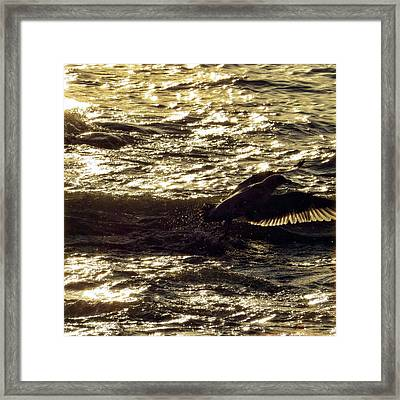 The Flight Framed Print