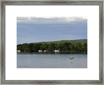 The Flight Of The Great Blue Heron Framed Print