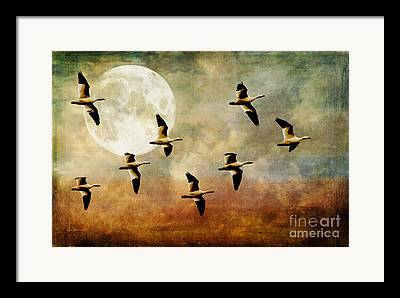 Wild Geese And Moon Framed Prints
