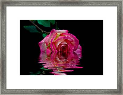 The Floating Rose Framed Print