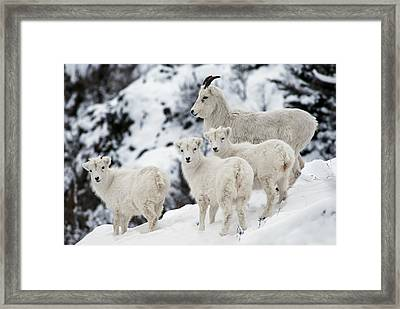 The Flockers Framed Print