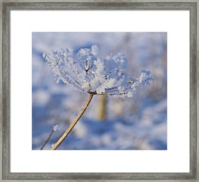 The Flower Crystal Framed Print by Dave Woodbridge