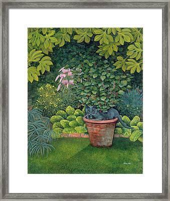The Flower Pot Cat Framed Print by Ditz