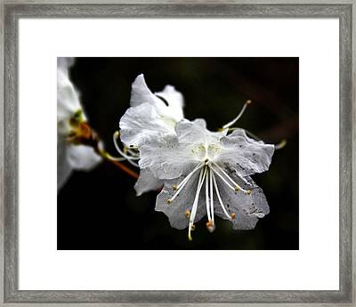 The Flower Framed Print by Tim Buisman