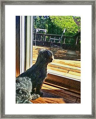 The Fluffy Watcher Framed Print