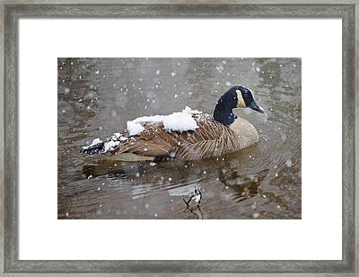 The Flurry Collector Framed Print by Betsy Knapp