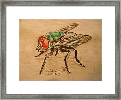 The Fly Framed Print by Fladelita Messerli-