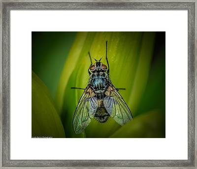 The Fly Framed Print by Linda Karlin