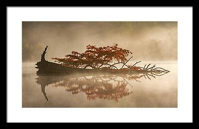Fallen Tree Photographs Framed Prints