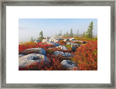 The Fog Clears At Dolly Sods Framed Print by Bill Swindaman