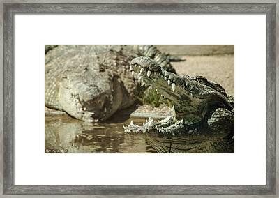 Framed Print featuring the photograph The Fool Crocodile by Stwayne Keubrick