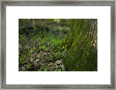 The Foot Of A Tree Framed Print by Michael Williams