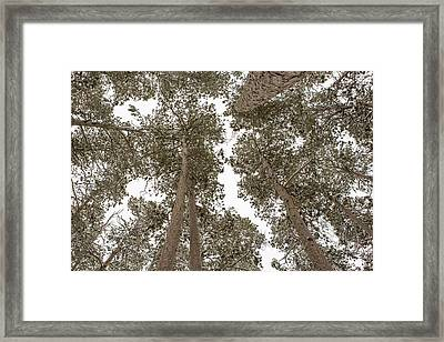 The Forest Canopy Framed Print by Tim Grams