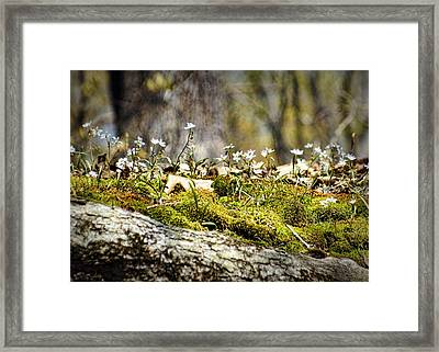 The Forest Floor Framed Print by Cricket Hackmann