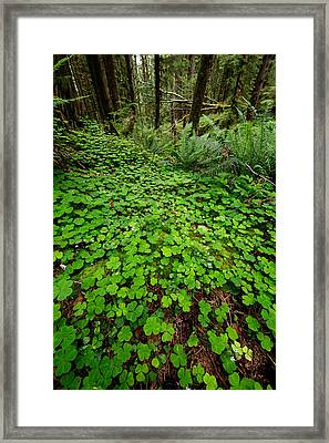 The Forest Floor Framed Print by Rick Berk
