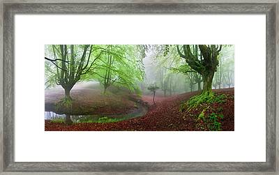 The Forest Maravillador IIi Framed Print
