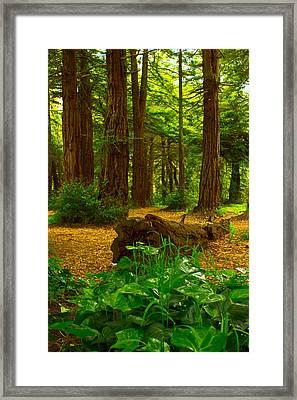 The Forest Of Golden Gate Park Framed Print