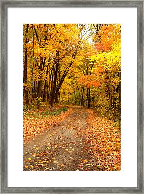 The Forest Road Framed Print by Jim McCain