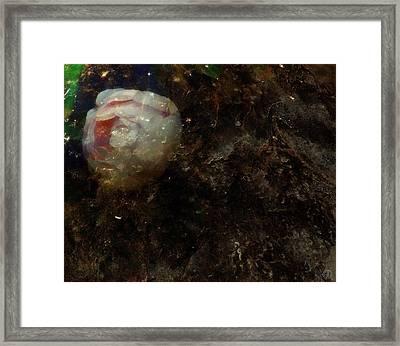 The Forgotten Rose Framed Print by Gun Legler