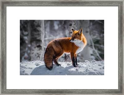 The Fox 1 Framed Print