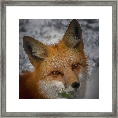 The Fox 4 Digital Art Framed Print
