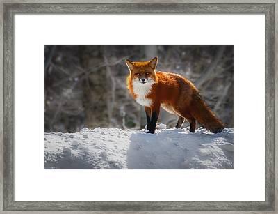 The Fox 4 Framed Print