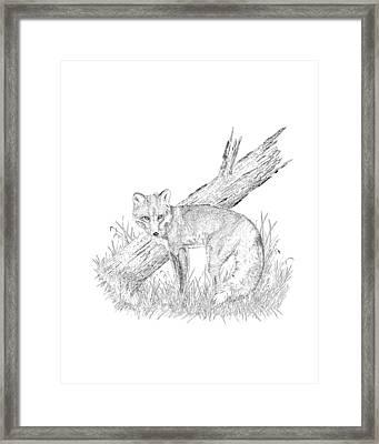 The Fox Framed Print by Carl Genovese