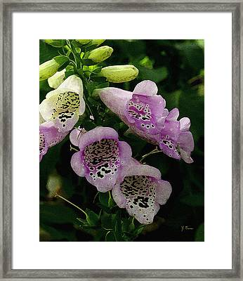 Framed Print featuring the photograph The Foxglove by James C Thomas
