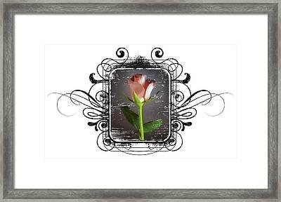 The Framed Rose Framed Print by Mauro Celotti