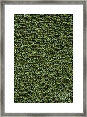 The Friendly Confines Framed Print