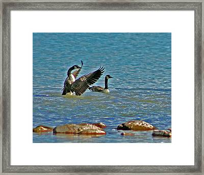 The Friendly Persuasion Framed Print by Rhonda Humphreys