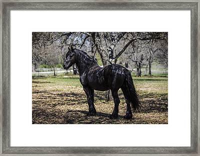 The Friesian Stallion Eros Framed Print