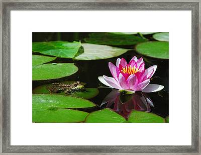 The Frog And The Lily Framed Print by Janice Adomeit