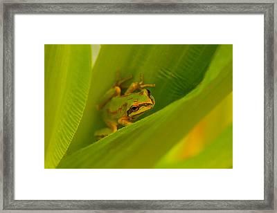 The Frog Framed Print