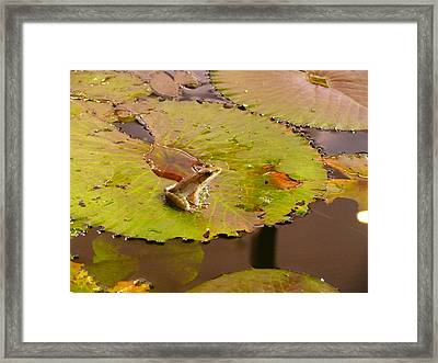 Framed Print featuring the photograph The Frog by Evelyn Tambour