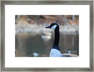 Framed Print featuring the photograph The Gander by David Jackson