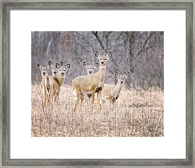 The Gang Framed Print