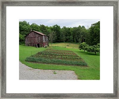 The Garden 2013 Framed Print by Diane Mitchell