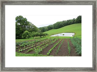 The Garden II Framed Print by Diane Mitchell