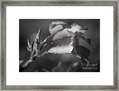 The Garden Of Dreams  Framed Print by Sharon Mau