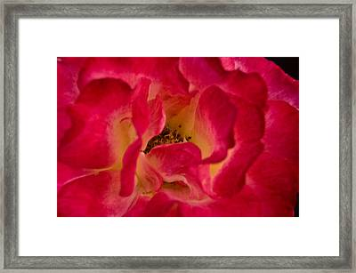The Garden Of Love Framed Print