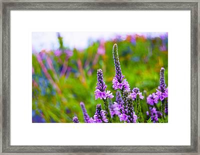 The Garden Palette Framed Print by Christi Kraft