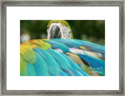 The Garden Whispers Framed Print by Sharon Mau