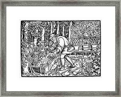 The Gardener, 1550 Framed Print by Granger
