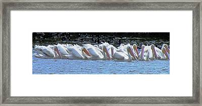 The Gathering 2 Framed Print by Will Boutin Photos