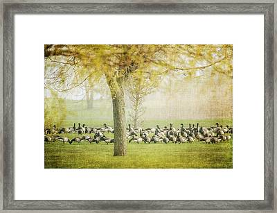 The Gathering Framed Print